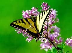 Butterfly-piqsels.com-id-zqzdf