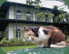 Hemingway Cat.png