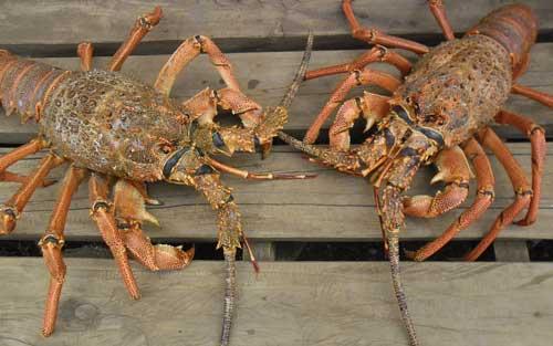 Lobster-piqsels.com-id-zpawb