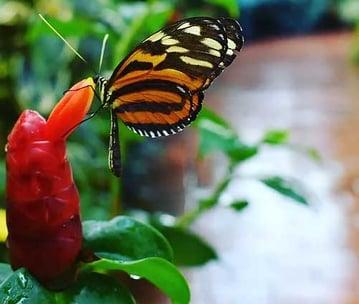 Butterfly-Conservatory-Key-West