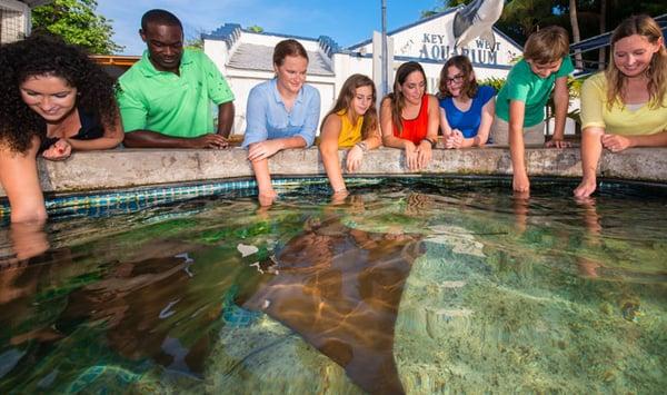 key-west-aquarium-stingray-touchtank