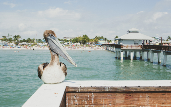 Ft Myers Beach Pier and Pelican piqsels.com-id-sddfh