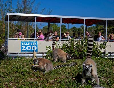 naples_zoo_photo.jpg